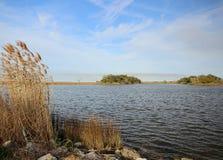 Het Moeras van Louisiane Stock Afbeelding