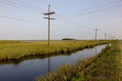 Het moeras van Louisiane Royalty-vrije Stock Foto