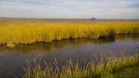 Het moeras van Louisiane Royalty-vrije Stock Fotografie