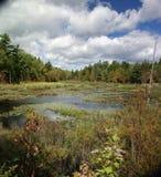 Het moeras van New England & lelievijver stock foto