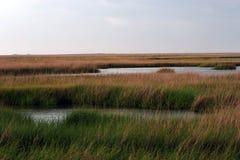in het moeras in Zuid-Louisiane Royalty-vrije Stock Fotografie
