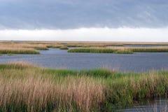 in het moeras in Zuid-Louisiane Royalty-vrije Stock Foto's