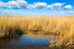 Het moerasland. Stock Foto's