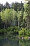 Het moerasland van Alaska langs Haines Highway Stock Foto