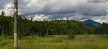Het moerasland van de berg stock afbeelding