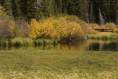 Het Moerasland van de herfst Stock Afbeeldingen