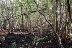 Het moerasland van Florida bij lowtide Royalty-vrije Stock Afbeeldingen