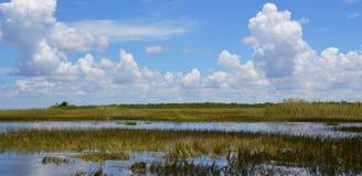 Het moerasland van Florida Everglades Nationaal Park in Florida, de V.S. stock fotografie