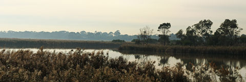 Het moeraslandpanorama van Seaford royalty-vrije stock afbeelding