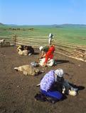 Het Mongoolse leven Stock Afbeeldingen