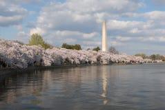 Het Monument van Washington stock afbeeldingen