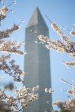 Het Monument van Washington met de Bloesems van de Kers Royalty-vrije Stock Foto