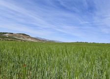Het mooie Andalusia platteland southen Spanje Stock Afbeeldingen