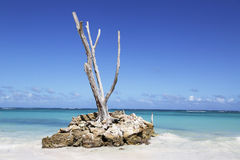 Het mooie Bavaro-Strand in Punta Cana, Dominicaanse Republiek Royalty-vrije Stock Foto's