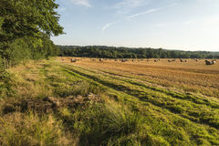 Het mooie beeld van het plattelandslandschap van hooibalen in de Zomer fie Royalty-vrije Stock Afbeeldingen