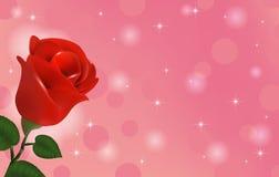 Het mooie behang met bloemrood nam toe Royalty-vrije Stock Foto's