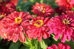 Het mooie bloem bloeien en zonsopgang in de avond stock foto's