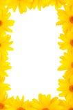 Het mooie bloemenframe Stock Afbeeldingen