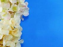 Het mooie boeket van de hydrangea hortensia kunstbloem op blauwe achtergrond stock fotografie
