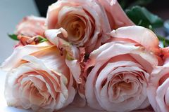 Het mooie boeket van rozen, sluit omhoog, geselecteerde nadruk stock afbeeldingen