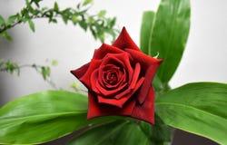 Het mooie boeket van rozenbloemen met bladeren thuis Stock Foto's