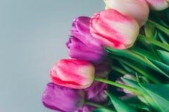 Het mooie boeket van verse kleurrijke roze purpere tulpen bloeit op grijze neutrale achtergrond met copyspace royalty-vrije stock foto's