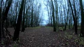 Het mooie bos lopen stock video