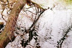 Het mooie calmful gedicht van de Flectionboom royalty-vrije stock afbeelding