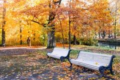 Het mooie de herfst zonnige landschap met de lege banken in de stegen van het Pavlovsk park, het rood en de sinaasappel gaat weg royalty-vrije stock fotografie