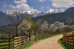 Het mooie de lentelandschap met bloeiende bomen en de sneeuw behandelden bergpieken, in de transylvanian heuvels Royalty-vrije Stock Afbeelding