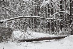 Het mooie de winter snow-covered bos de gevallen boom blokkeerde de manier Stock Fotografie