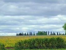 Het mooie gebied van de landschaps blauwe hemel Royalty-vrije Stock Foto's