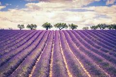 Het mooie Gebied van de Lavendel Royalty-vrije Stock Afbeeldingen