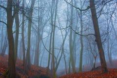 Het mooie geheimzinnigheid bos met mist en de herfst gaat ter plaatse weg Stock Foto's
