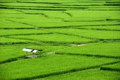 Het mooie groene hoogtepunt van het padiegebied van rijst in de provincie van Nan It is mooi, vers in het regenseizoen, toeristis Stock Fotografie