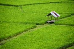 Het mooie groene hoogtepunt van het padiegebied van rijst in de provincie van Nan It is mooi, vers in het regenseizoen, toeristis Stock Afbeeldingen