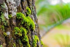Het mooie groene mos groeit op de boom in bos Stock Foto's