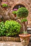 Het mooie hoogtepunt van de steenportiek van installaties in de oude stad royalty-vrije stock afbeelding
