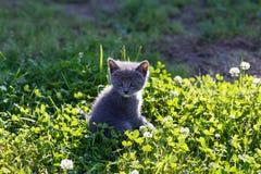 Het mooie katje spelen op groene grasachtergrond Royalty-vrije Stock Foto's