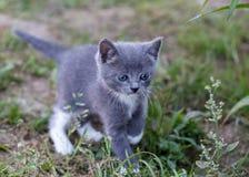 Het mooie katje spelen op groene grasachtergrond Stock Afbeeldingen