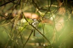 Het mooie kleine bosmees voeden op motten in een boom stock afbeelding