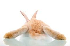 Het mooie konijntje liggen gezien van rug royalty-vrije stock foto's