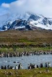 Het mooie landschap die aan een steile sneeuw leiden behandelde berg, groot aantal Koning Penguins die beide kanten van een gevul royalty-vrije stock fotografie