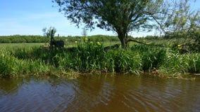 Het mooie landschap in Friesland stock afbeelding