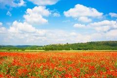 Het mooie landschap met gebied van rode papaver bloeit en blauwe hemel in Monteriggioni, Toscanië, Italië Royalty-vrije Stock Foto's