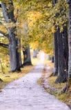 Het mooie landschap van de de herfstaard in geel park Stock Afbeelding