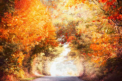 Het mooie landschap van de de herfststeeg met kleurrijk dalingsgebladerte van bomen en zonlicht, valt openluchtaard stock afbeelding