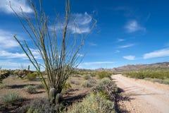 Het mooie landschap van de de lentewoestijn van Ocotillo-installaties royalty-vrije stock afbeelding