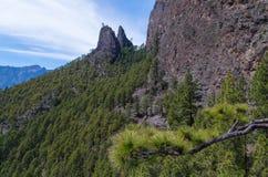 Het mooie landschap van de pijnboomboom op La Palma, Canarische Eilanden, Spanje Stock Fotografie