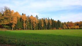 Het mooie landschap van het land in een de herfstdag Groene oranje bomen en nog groen grasgebied stock video